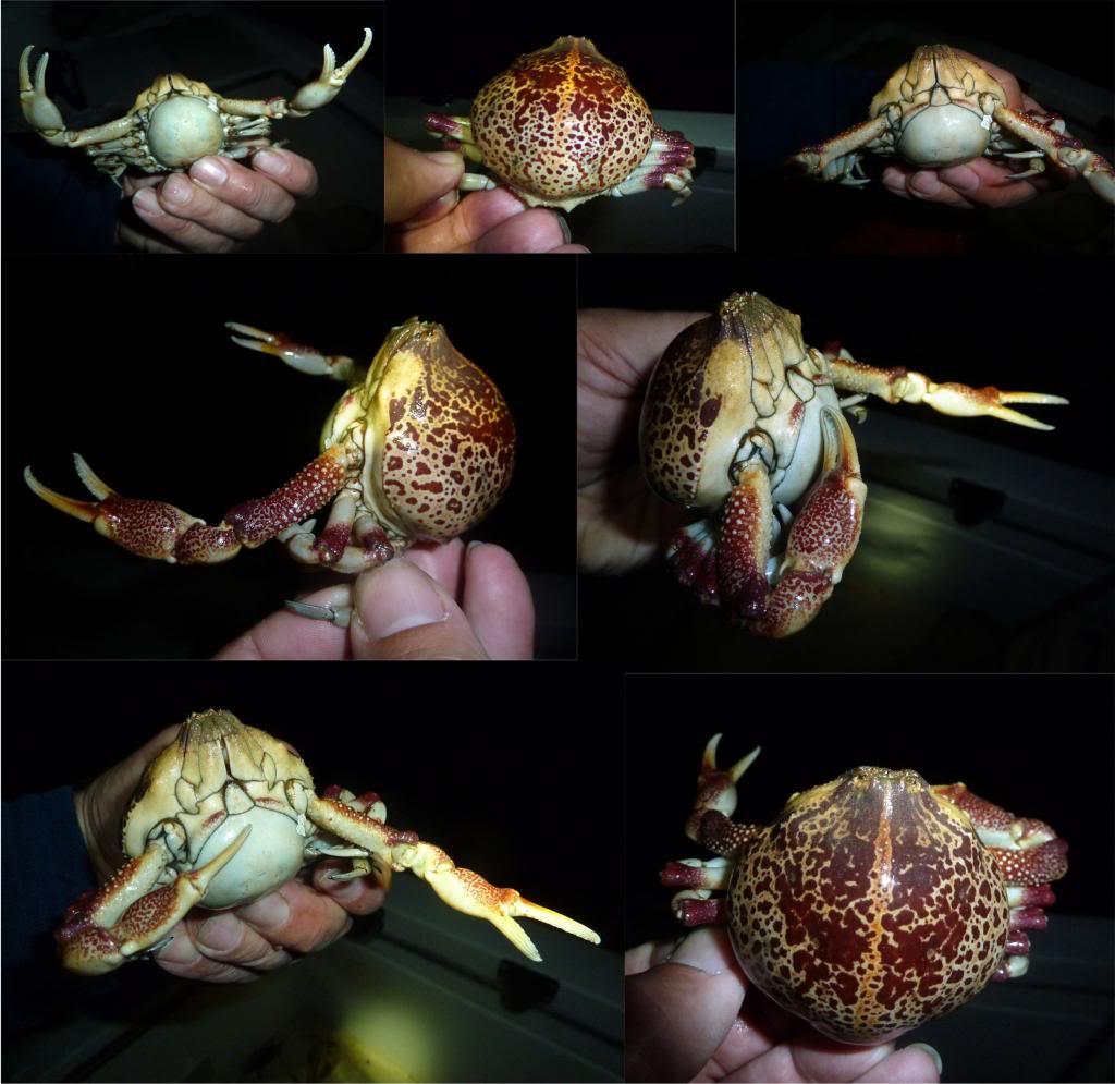 CrabMontage_zpsd0dc8028