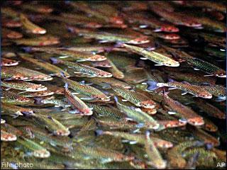 fish_hatchery
