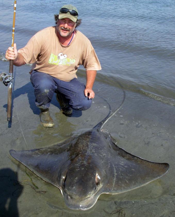 Bat Ray Fishing Southern California Bays -
