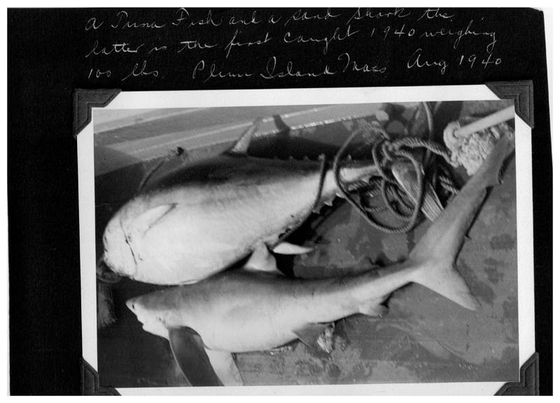 Sharks were not overlooked as good tablefare either although many thumbed their noses at it
