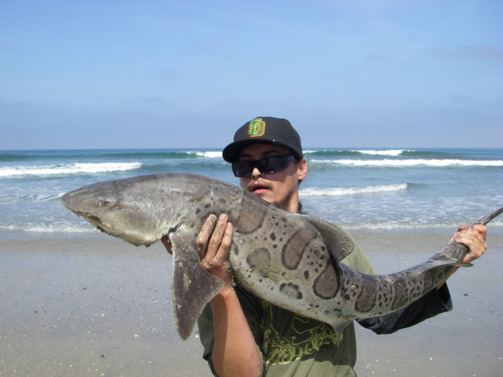 Josh's first Leopard Shark from the surf