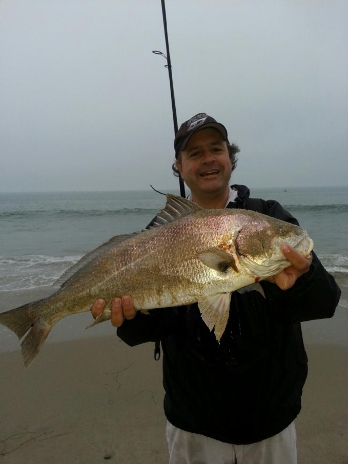 Spotfin croaker fishing for Surf fishing southern california