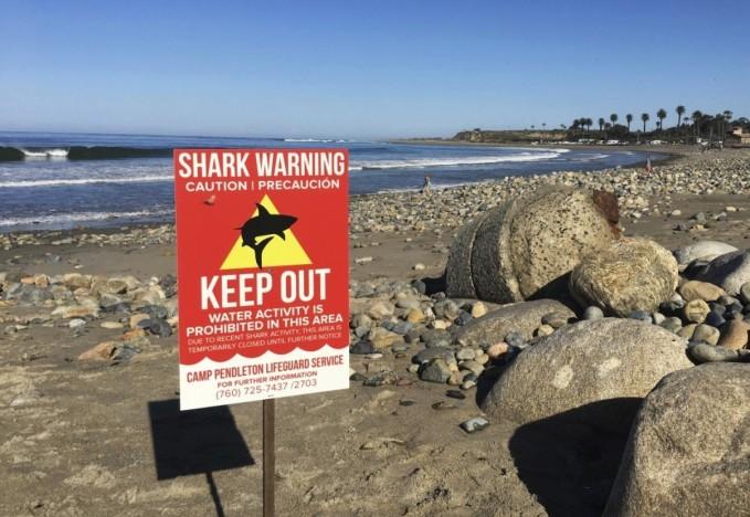 Shark Attack2